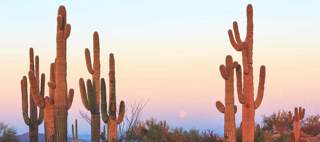 Cacti in Tucson Arizona