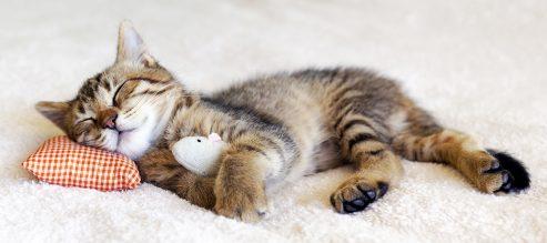 Kitten fast asleep after massage